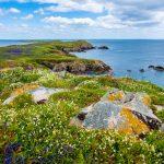 saltee island ireland