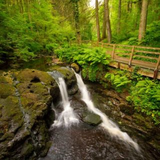 Glenariff Forest Park County Antrim - game of thrones filming locations in ireland