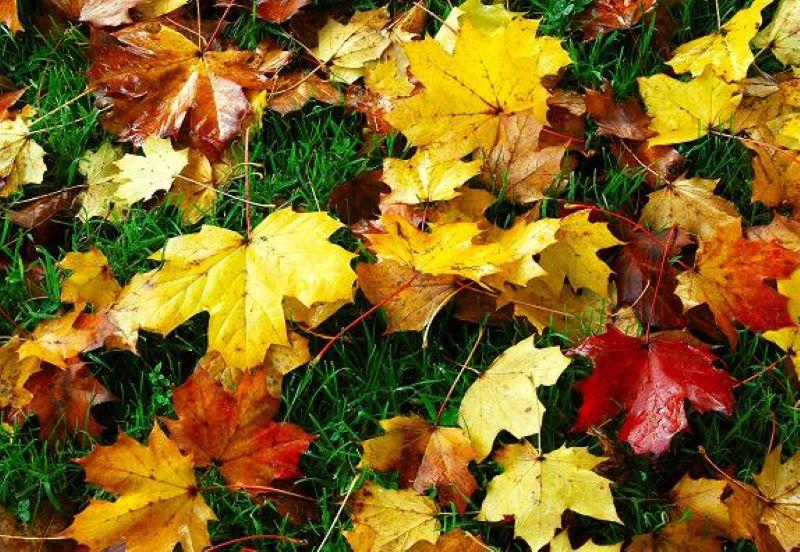 Stroll Through the Autumn Leaves